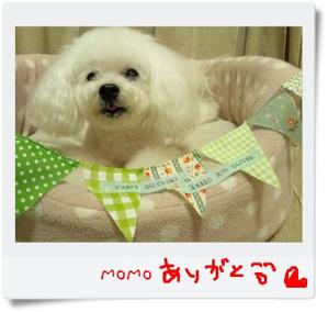Momo_2